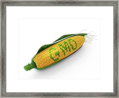 Genetically Modified Corn Framed Print by Andrzej Wojcicki