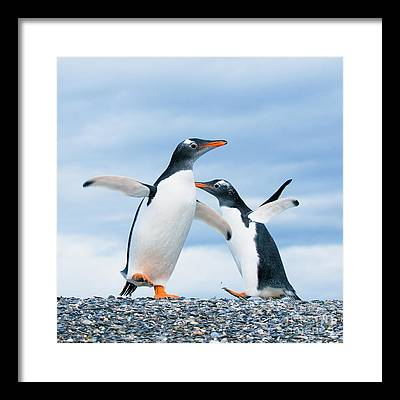Penguin Framed Prints