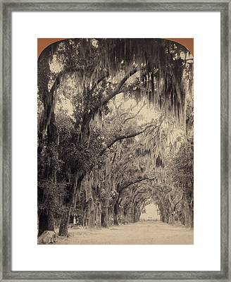 Framed Print featuring the painting Georgia Oak Trees, C1887 by Granger