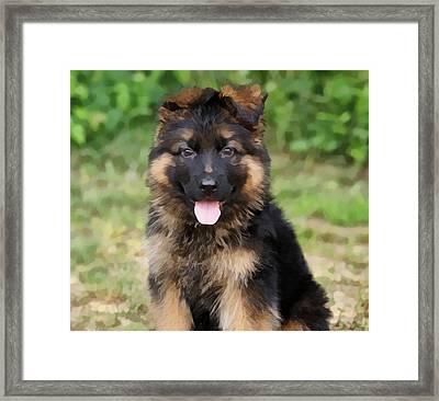 German Shepherd Puppy Framed Print by Sandy Keeton