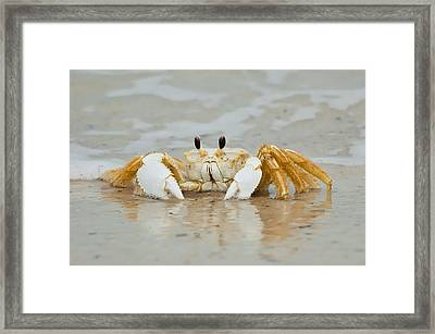 Ghost Crab Framed Print by Rich Leighton