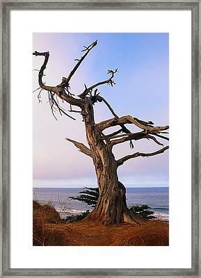Ghost Tree In Carpinteria Framed Print