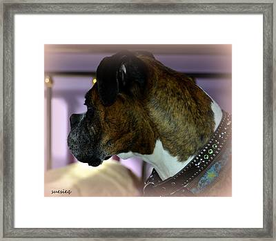 Gia Framed Print by Sue Rosen
