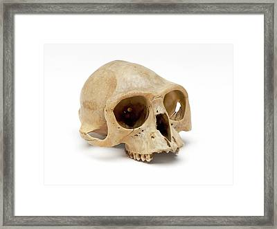 Gibbon Skull Framed Print by Ucl, Grant Museum Of Zoology