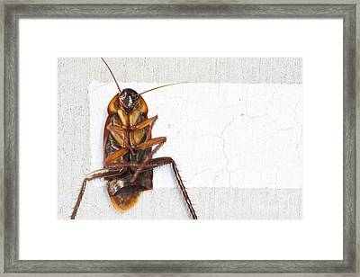 Gigantic Road Kill Framed Print by Jorgo Photography - Wall Art Gallery