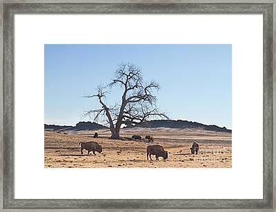 Give Me A Home Where The Buffalo Roam Framed Print by James BO  Insogna
