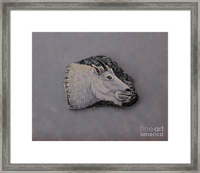 Glacier Park Mountain Goat Framed Print