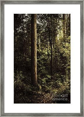 Glengarry Tasmania Bush Forest In Australia Framed Print by Jorgo Photography - Wall Art Gallery