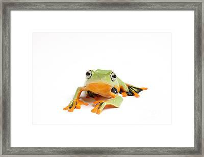 Gliding Frog Framed Print by Scott Linstead