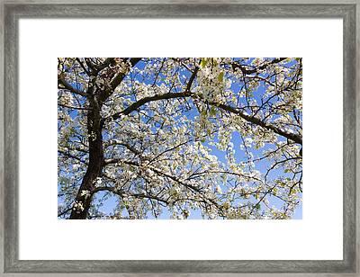 Glimpse Of Spring Framed Print by Heidi Smith