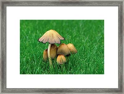 Glistening Ink-cap Framed Print