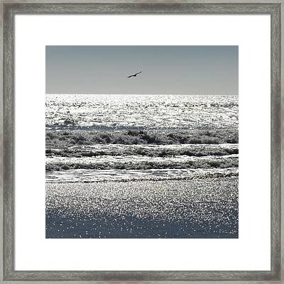 Framed Print featuring the photograph Glitter by Aurora Levins Morales