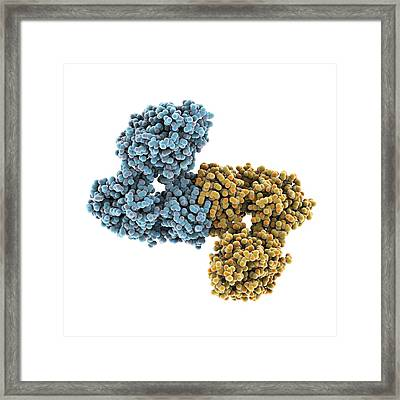 Gmp Synthetase Enzyme Framed Print by Science Photo Library