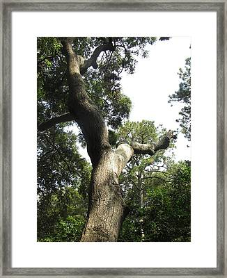 Framed Print featuring the photograph Gnarled Tree 2 by Cathy Lindsey