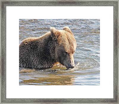 Go Ahead Make My Day Framed Print by Dyle   Warren