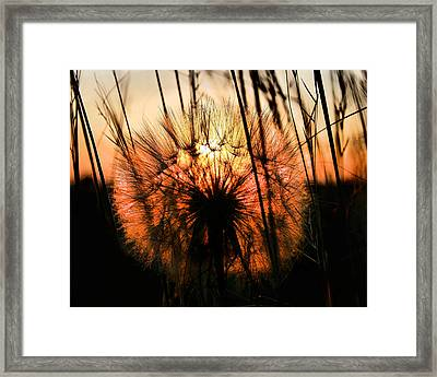 Going To Seed Framed Print by Steven Reed