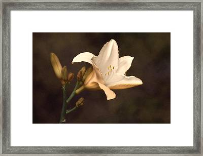 Golden Daylily Framed Print by Tom Mc Nemar
