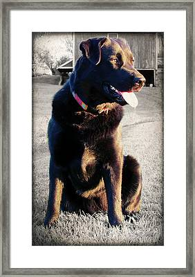 Golden Girl Framed Print by Andrea Dale