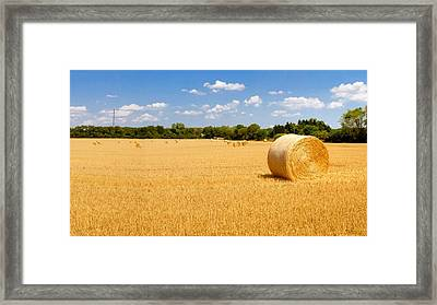 Golden Harvest Framed Print by Roger Gallamore