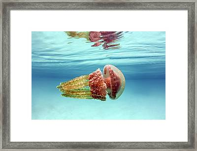 Golden Jellyfish Framed Print