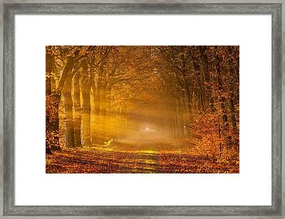 Golden Rays Of Autumn Framed Print