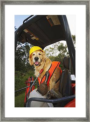 Golden Retriever Supervising Framed Print