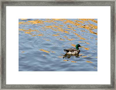 Framed Print featuring the photograph Golden Ripples by Keith Armstrong
