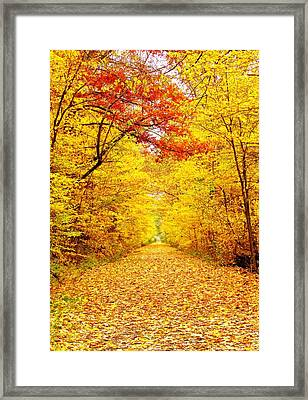 Golden Trail Framed Print by Andrea Dale