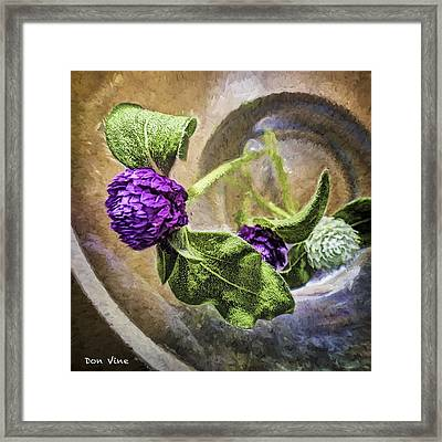 Gomphrena In A Glass Framed Print