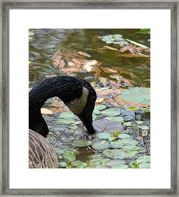 Goose Framed Print by Jane Ford