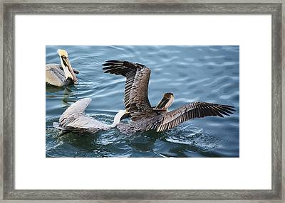 Gotcha Framed Print by Paulette Thomas