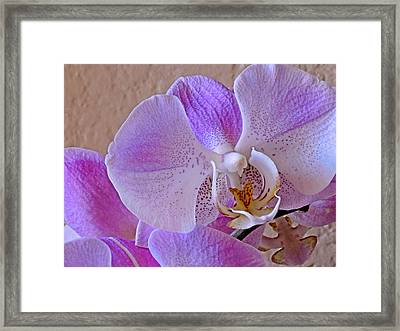 Framed Print featuring the photograph Grace And Elegance by Lynda Lehmann