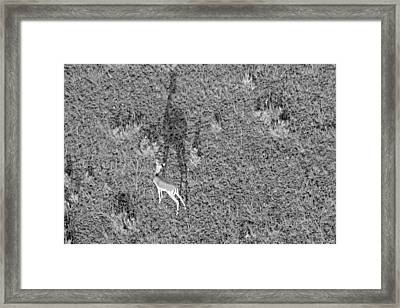 Grants Gazelle Framed Print by Tony Murtagh