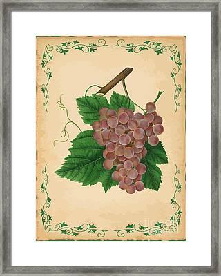 Grapes Illustration Framed Print by Indian Summer