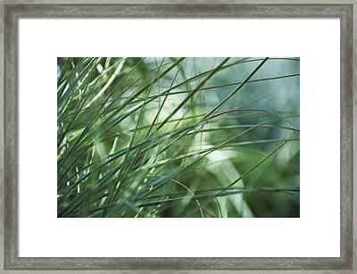 Grass Abstract Framed Print by Sabina  Horvat