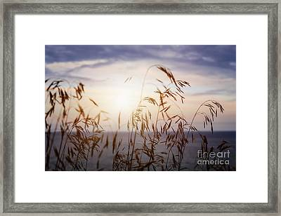 Grass At Sunset Framed Print by Elena Elisseeva