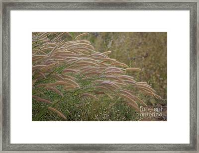 Grass Together In A Group Framed Print