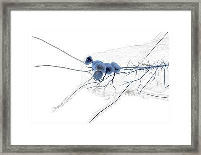 Grasshopper Nervous System Framed Print