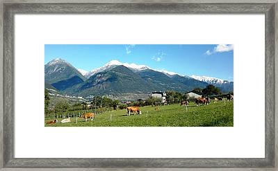 Grazing Cows  Framed Print by Giuseppe Epifani