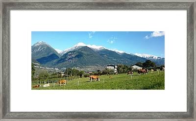 Grazing Cows  Framed Print by Giuseppe Epifani