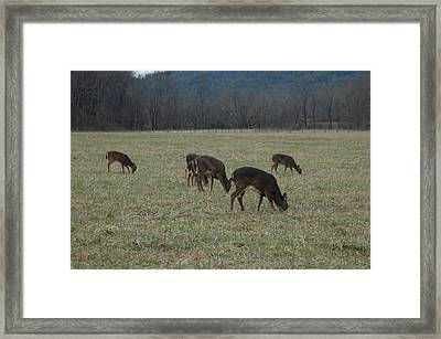 Grazing Framed Print by Les Scarborough