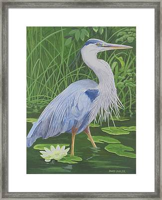 Great Blue Heron Framed Print by James Lawler