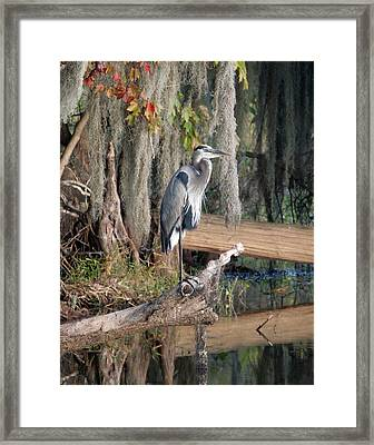 Great Blue Heron Framed Print by Jeff Wright