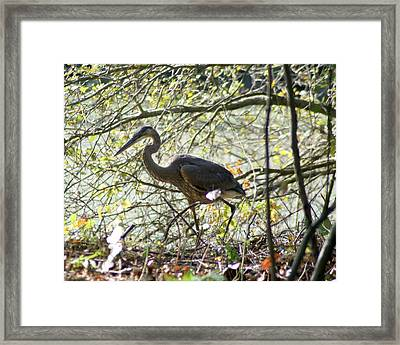 Framed Print featuring the photograph Great Blue Heron In Bushes by Karen Silvestri