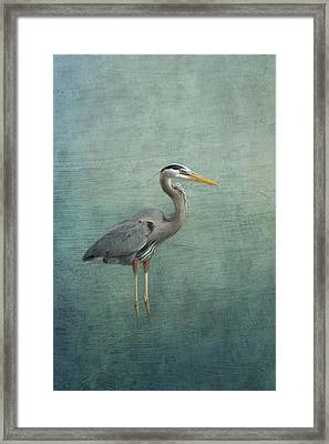 Great Blue Heron Framed Print by Kim Hojnacki