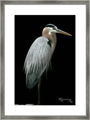 Great Blue Heron Framed Print by Mariarosa Rockefeller