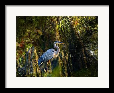 Great Blue Heron Digital Art Framed Prints