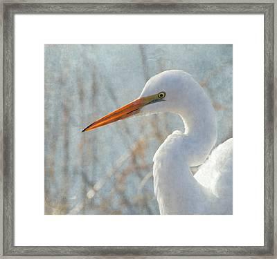 Great Egret Framed Print by Angie Vogel