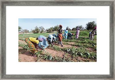 Great Green Wall Farming Framed Print