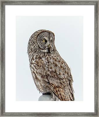 Great Grey Framed Print by Yeates Photography